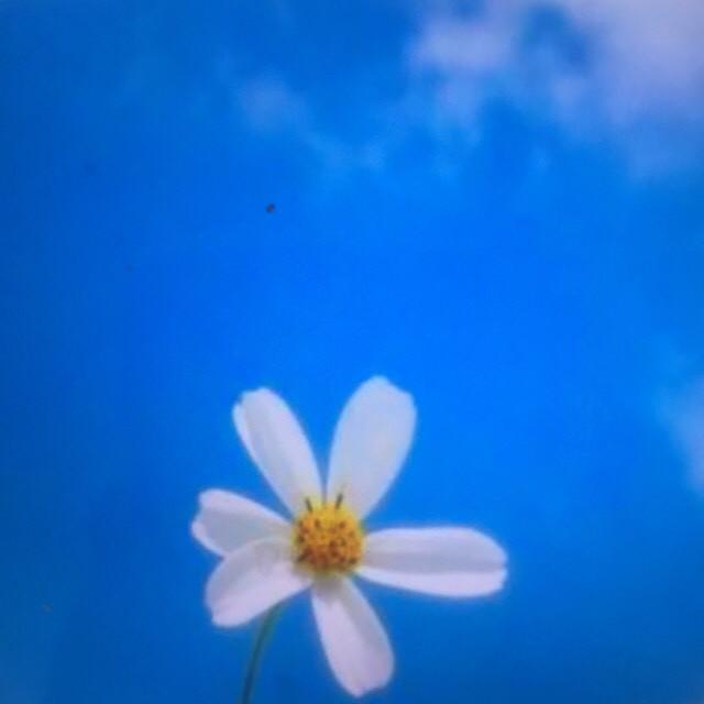 我是真的爱过原唱是灯塔,由你若安好,便是晴天翻唱(播放:38)