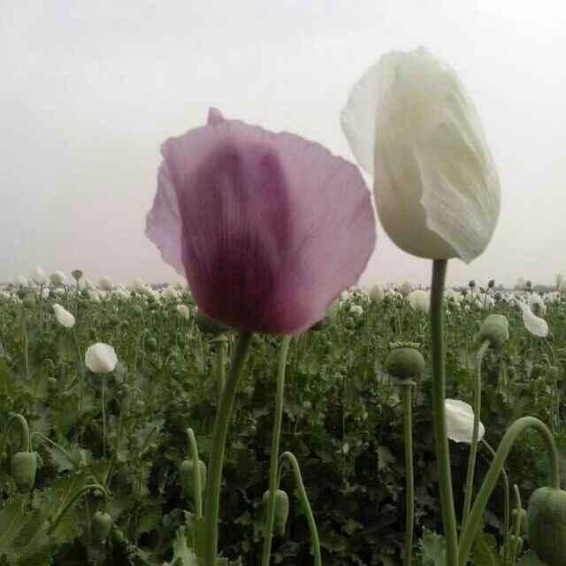 雨中的思念由青青草演唱(原唱:祁隆)