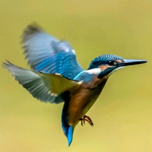 站着等你三千年在线听(原唱是王琪),爱思哒小鸟演唱点播:23次