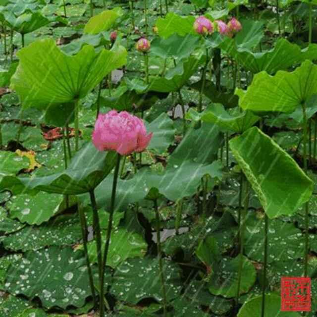 铁窗泪(热度:46)由风雨前程翻唱,原唱歌手迟志强/张秀艳